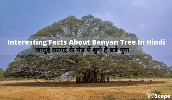 जादुई बरगद के पेड़ में छुपे है बड़े गुण – About Banyan Tree in hindi