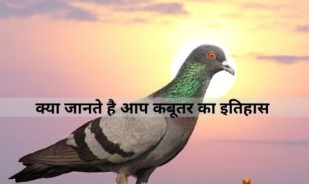 About Pigeon in Hindi